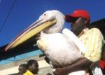 BAHATI BIRD [PHOTO | COURTESY]