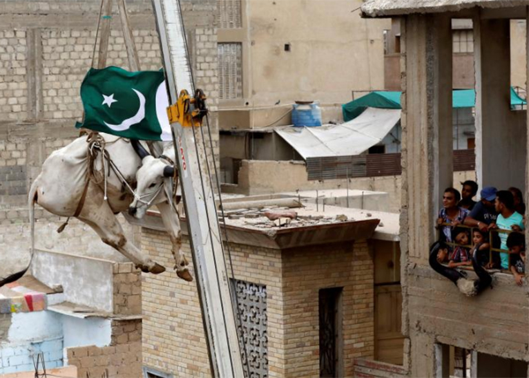 Residents watch as a sacrificial cow is lowered from a rooftop by crane, ahead of the Eid al-Adha festival in Karachi, Pakistan, August 12, 2018. [PHOTO | COURTESY]