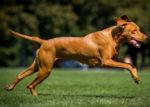 EMBU DOG BITES MAN [PHOTO | COURTESY]