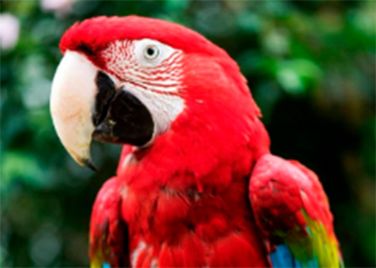 PARROT ARRESTED IN BRAZIL FOR ALERTING OWNERS OF IMPENDING ARREST [PHOTO | COURTESY]